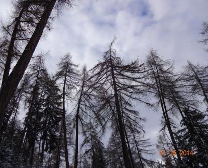 arbres-mâts